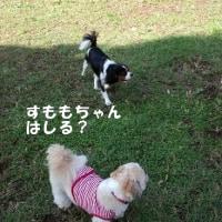 秋風の中 ドッグランを満喫(*^_^*)