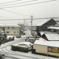 今年初めての雪❄