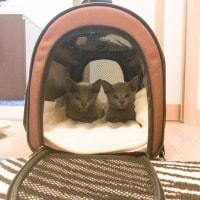 子猫たち 巣立ちました