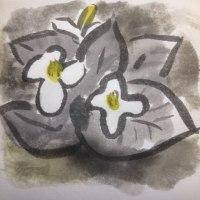 ドクダミ…白い追憶