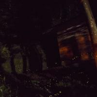 西条市のヒメボタルを見に行きました