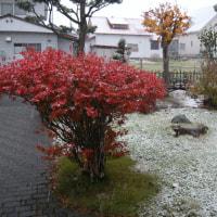 初冠雪です!