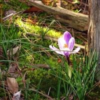 春分の日、晴れ。