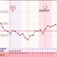 D25  高温期10日目