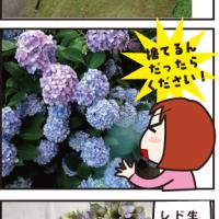 梅雨の花あじさい
