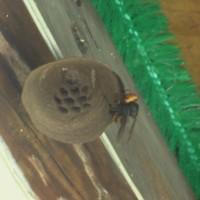 見たことのない蜂の巣が