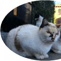 ◯【野良猫、にゃんとかしよう】・・・・ボランティア団体ら捕獲大作戦 里親探しも!