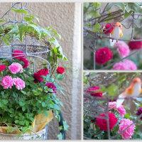 薔薇~bara~荒牧バラ公園(伊丹市)へ & ルークから母の日を♪