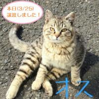 【再掲】猫の飼い主さん募集!(代理募集)
