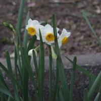 風邪と花と寿会