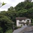 日本を無法地帯と化した主因者の一人は、鶴岡八幡宮に隣接する風致地区内で、立ちションをする、元大学教授である
