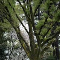 樹木から感じる