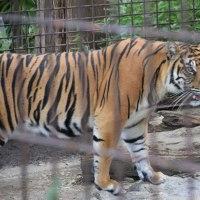 東山動植物園 3。