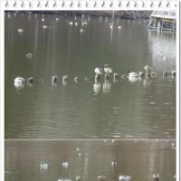 水辺の野鳥