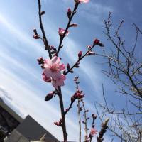 春は少しずつ近づいています♪