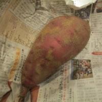 芋掘りは奥が深い…その(7)これぞ、芋料理のド定番。我が家の「芋ご飯」の作り方