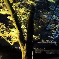 龍野城ライトアップ