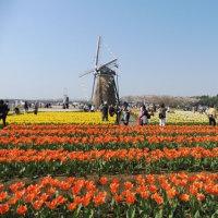 日本の風景:4月②(チューリップ、その他)