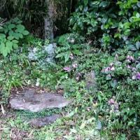 侍賢門院の墓?