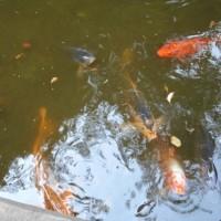 旧古河庭園~日本庭園など