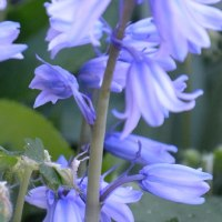 我が家の花・・・こんな色の花