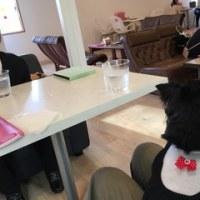 ドッグカフェでおからシフォン(*^-^*)