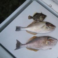 厳しい釣り