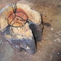 ひび割れ虫穴のカイヅカイブキ