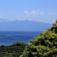 富士山 伊豆駿河湾沿いからの春彩追い...