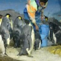 ご飯ペンギン