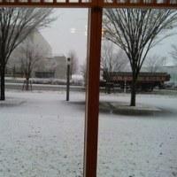 雪になりましたよ