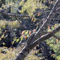 初秋の菊水山
