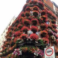 ロンドン旅行12「パブとタバコ」