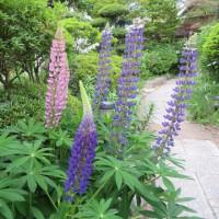 週末の準備をボチボチと 家の花