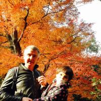 歌占カードと紅葉の六義園。