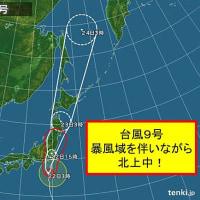 タチアオイ、台風、通勤ラッシュ