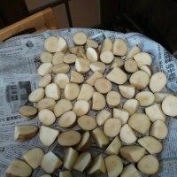 ジャガイモの種芋、カットしました。