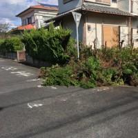 茨城 歩道に飛び出した 生垣の枝を元から切断 伐採作業