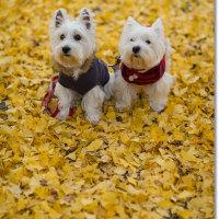 あまり天気は良くなっかたけど、去りゆく秋とともに。