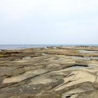 3/23探鳥記録写真-2(狩尾岬の鳥たち:ウミアイサ、ハマシギ、ミサゴ他)