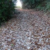 落ち葉がいっぱいの山道