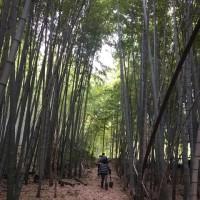 タケノコ堀