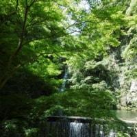 神戸市には何度も行きましたが、布引の滝へは初めてです。都市の中心部のすぐ横にこのような滝があるのは驚きです