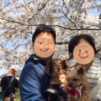 お花見第三弾 桜の名所角館へ