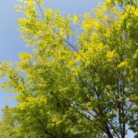 多摩川の季節は変わる