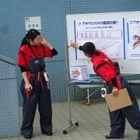 アオウミガメの健康診断