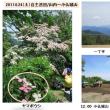 2017年6月24日(土)自主巡回稲荷山コース(通常巡回)