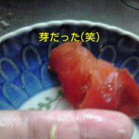 トマゾウムシ