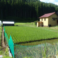 田んぼの除草について