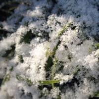 二月の雪と梅